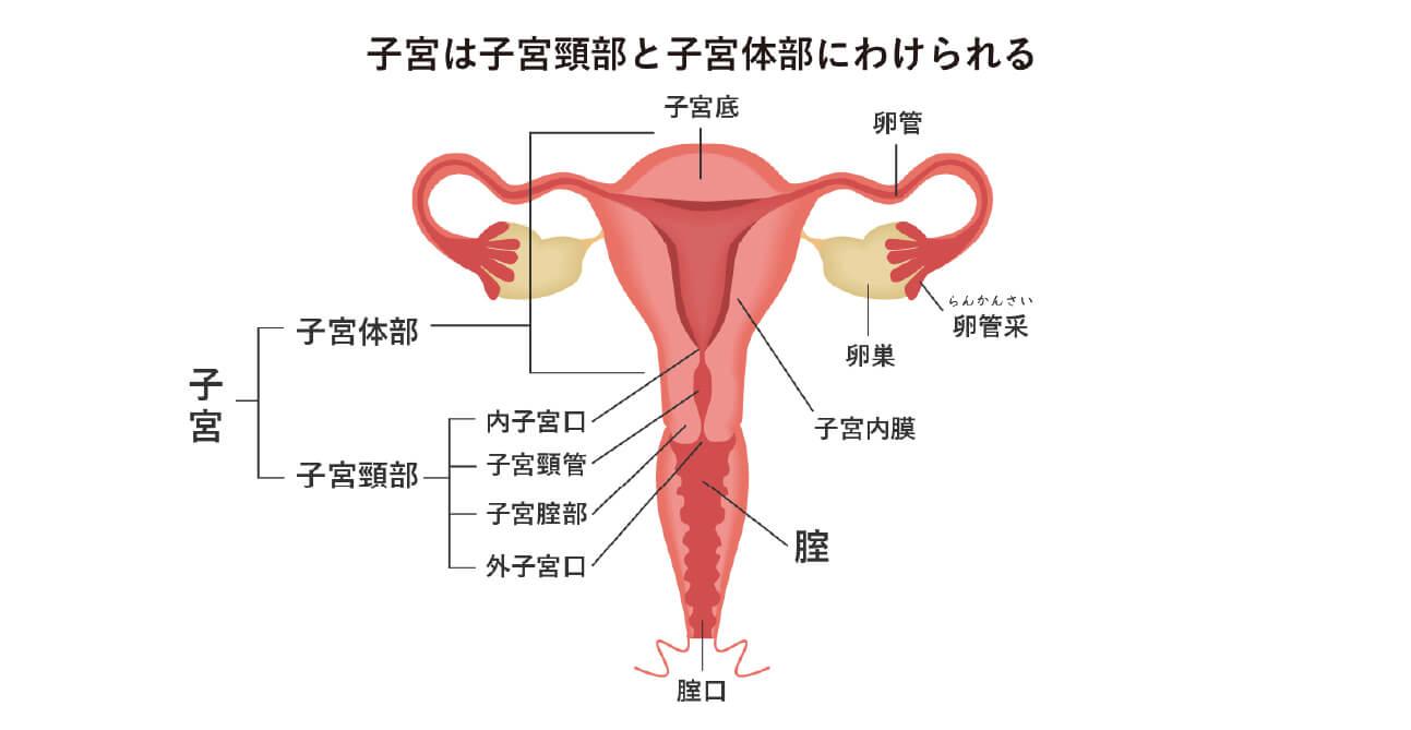子宮頸がんについて(診断〜治療まで)イメージ