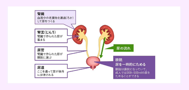 膀胱がんって、どんな病気?のイメージ画像