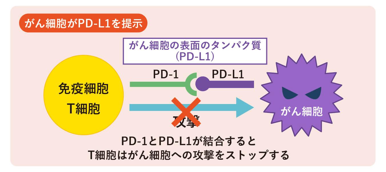 がん細胞がPD-L1を提示